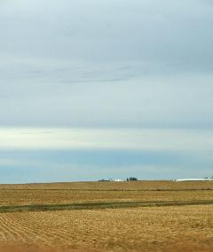 Corn and Sky
