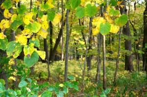 Leafy Frame