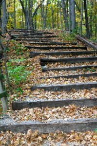 Leafy Stairs