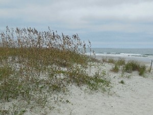 Dunes at Huntington Beach State Park with seaoats