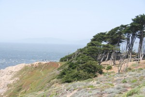CliffWindyTrees